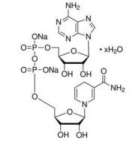线粒体与NADH有什么关系?