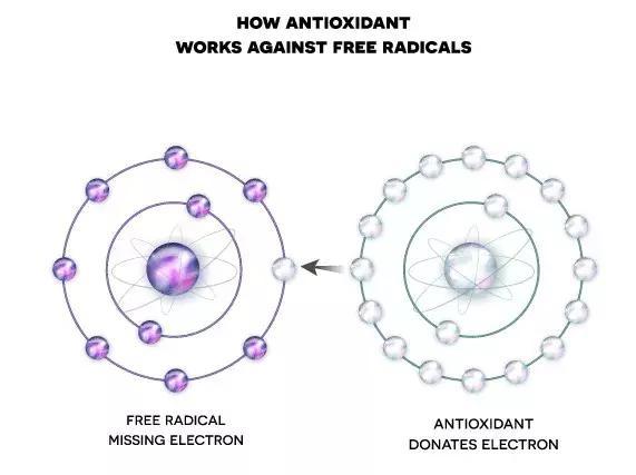 厉害了!原来NADH 在人体内竟是个抗氧化高手