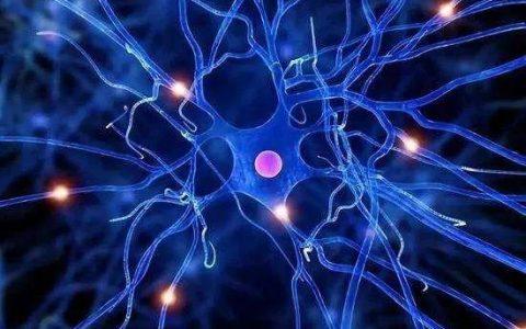 研究:补充线粒体素NADH或可降低神经退行性疾病(NDD)风险