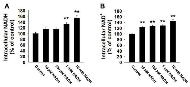 抗衰老之王:赛立复线粒体素NADH为什么能抗衰老?